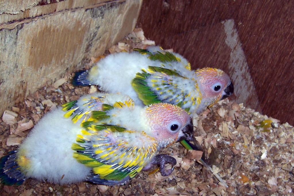 У попугая выпадают перья на голове