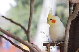 Волнистый попугай аллергия у детей