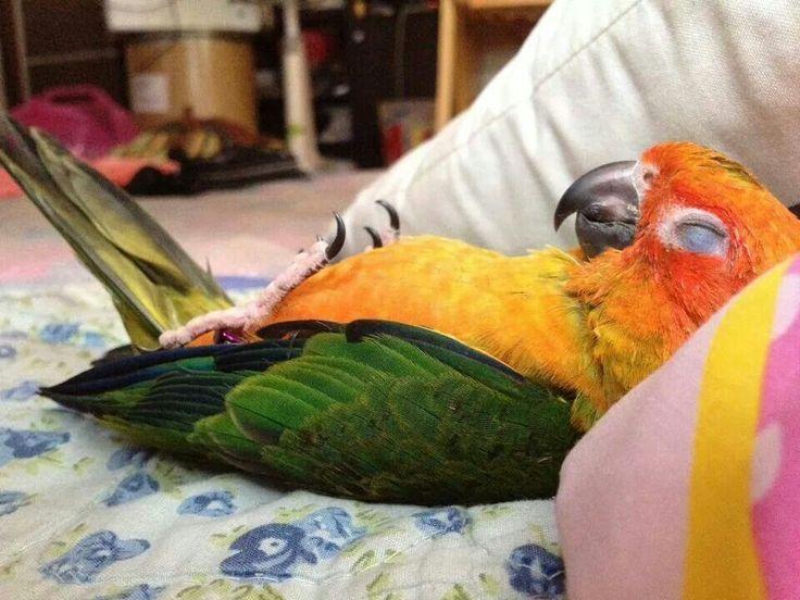 Почему попугай спит целый день