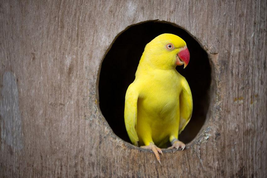 Домашние попугаи уход
