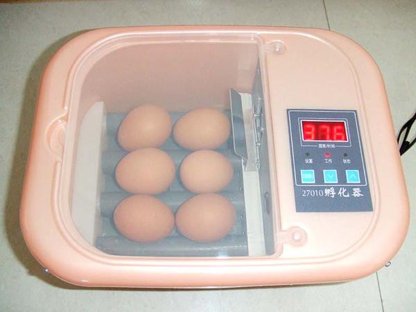 Как высидеть яйцо попугая в домашних условиях