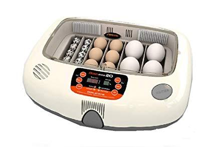Как высидеть яйцо волнистого попугая в домашних условиях