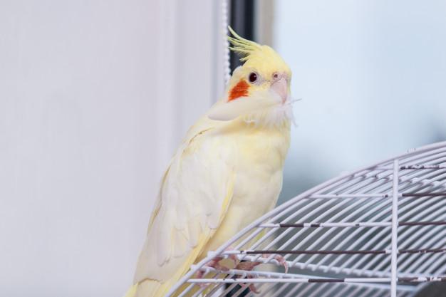 Как выбрать клетку для попугая корелла