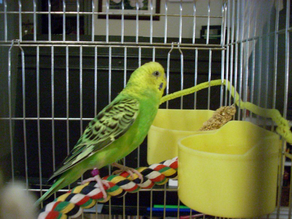 Поилка для волнистого попугая