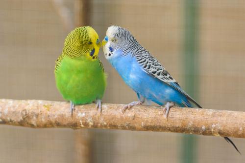Песок для волнистых попугаев