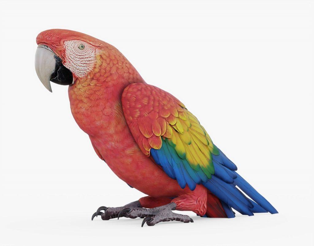 Сине красный ара