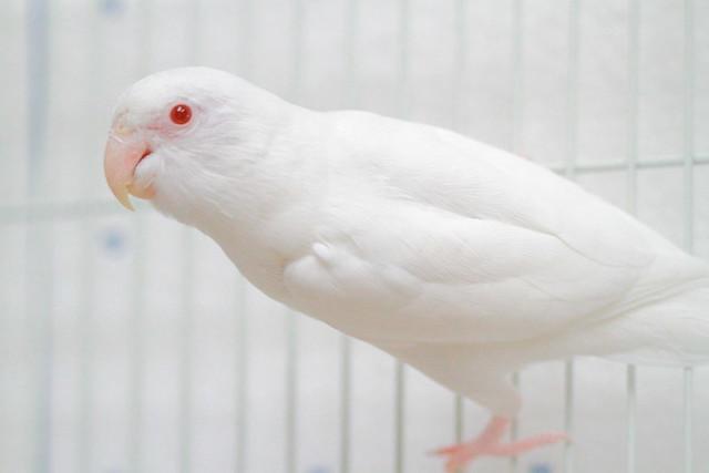 У попугая красные глаза
