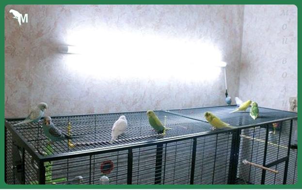 УФ лампа для попугаев