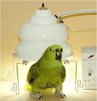 Лампа для попугаев волнистых