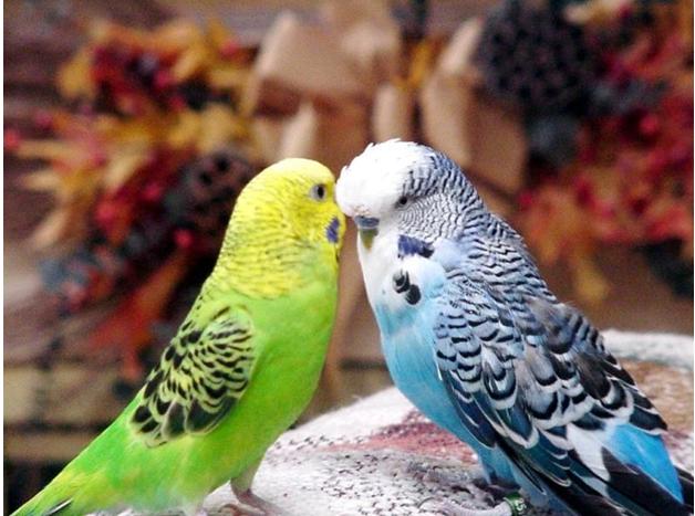Обогрев попугая лампой