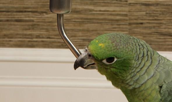 Поилка для крупных попугаев