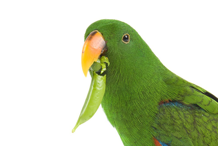 Попугай много ест и спит