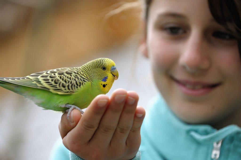 Есть ли аллергия на попугаев у детей