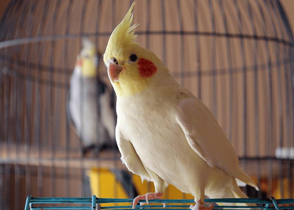 Бывает ли аллергия на попугаев у детей