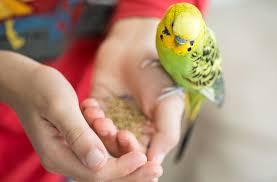 Аллергия на попугая у ребенка: как проявляется