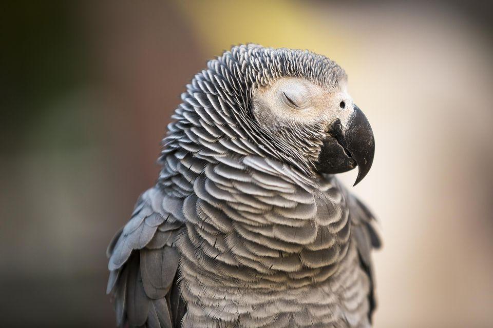 Сколько должен спать попугай
