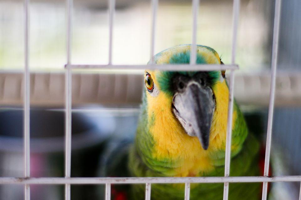 Вольер для волнистых попугаев