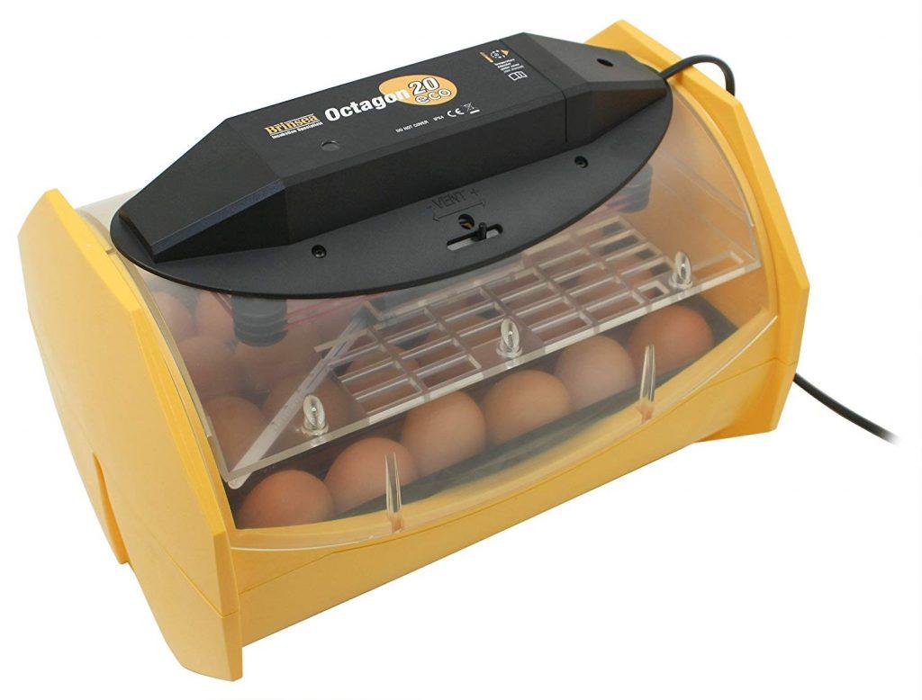 Как высидеть яйцо ппопугая корелла в домашних условиях