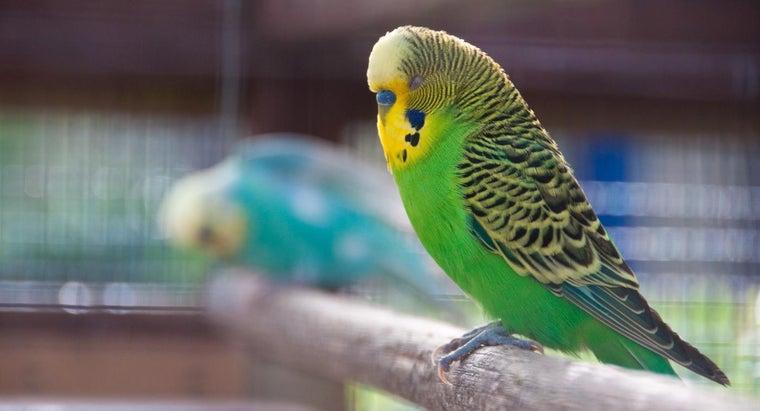 Тетрациклин попугаю