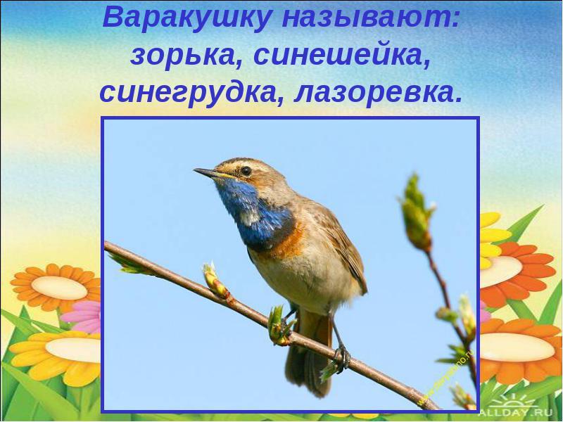 Птичка варакушка