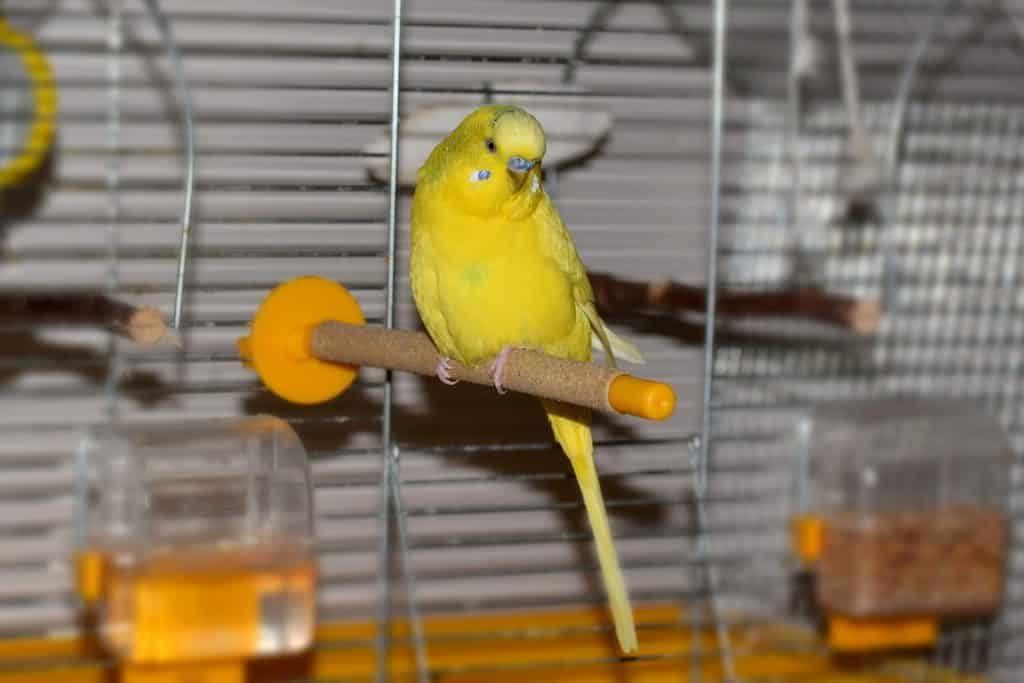 Кормушка для попугаев в клетку