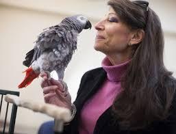 Попугай Гриффин